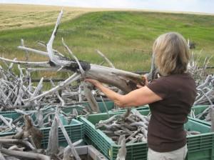 Deborah Butterfield looking for suitable sculpting material